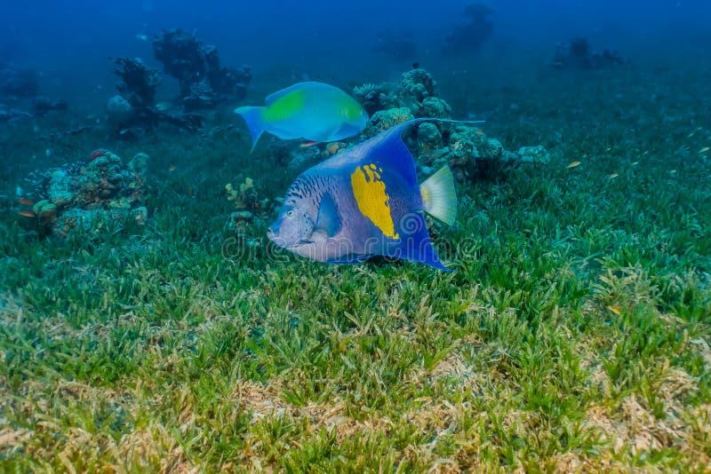 Τα καταπληκτικά ψάρια κολυμπούν στη Ερυθρά Θάλασσα στοκ φωτογραφία με δικαίωμα ελεύθερης χρήσης