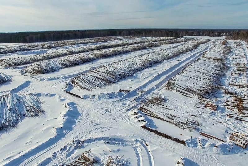 Τα καταρριφθε'ντα δέντρα βρίσκονται κάτω από το ανοιχτό ουρανό Αποδάσωση στη Ρωσία Καταστροφή των δασών στη Σιβηρία Συγκομιδή του στοκ φωτογραφίες με δικαίωμα ελεύθερης χρήσης