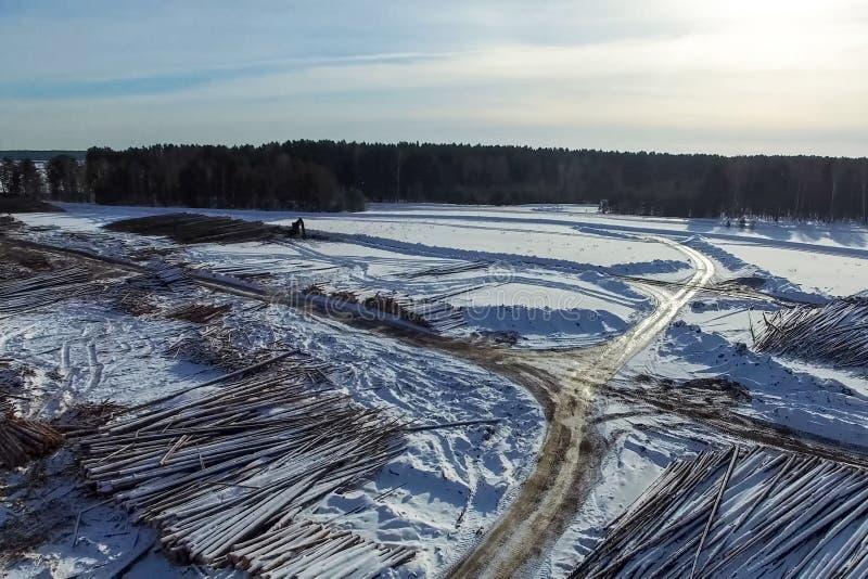 Τα καταρριφθε'ντα δέντρα βρίσκονται κάτω από το ανοιχτό ουρανό Αποδάσωση στη Ρωσία Καταστροφή των δασών στη Σιβηρία Συγκομιδή του στοκ εικόνα