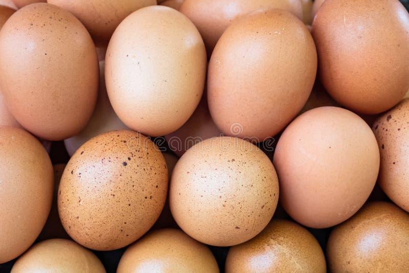 Τα καφετιά αυγά κοτόπουλου κλείνουν επάνω στο αγρόκτημα στοκ εικόνα