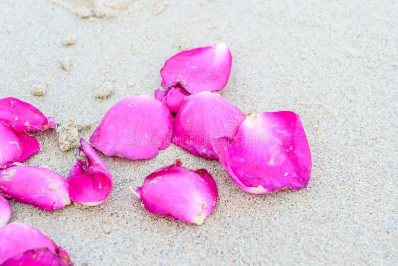 Τα κομμάτια αυξήθηκαν στην παραλία στοκ εικόνες