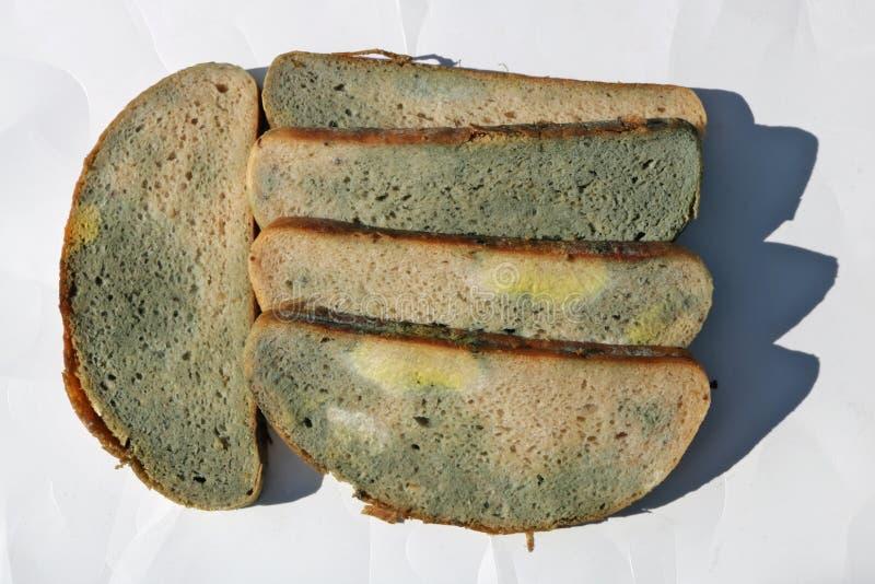 Τα κομμάτια του moldy σάπιου ψωμιού βάζουν στη Λευκή Βίβλο στοκ φωτογραφίες με δικαίωμα ελεύθερης χρήσης