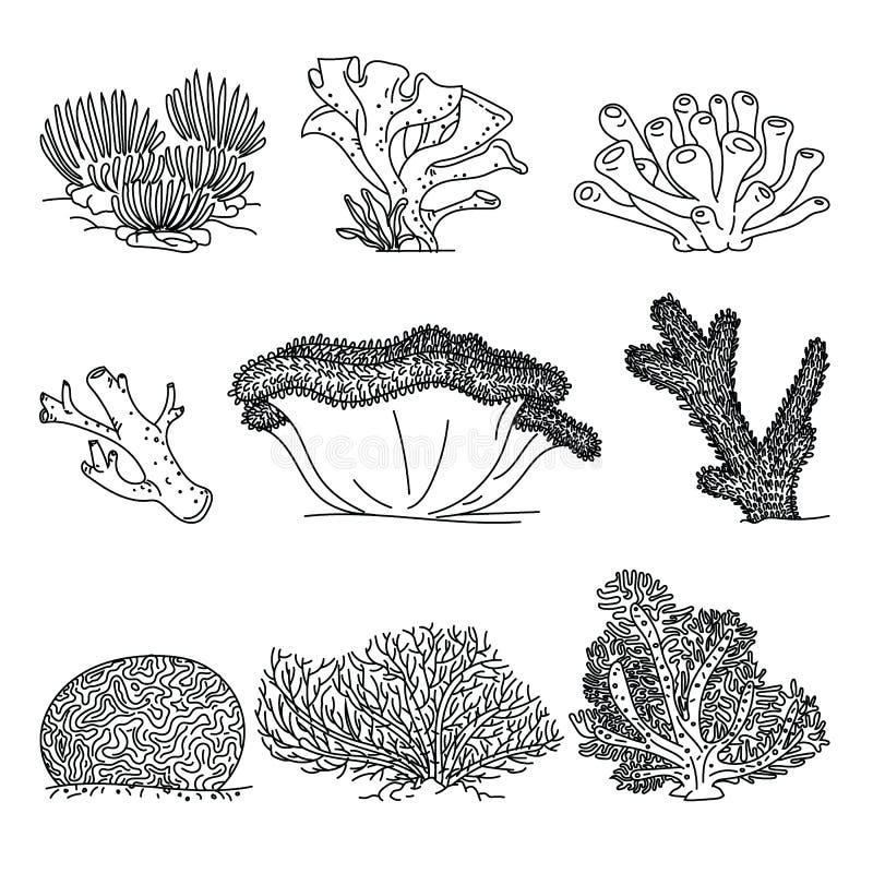 Τα κοράλλια δίνουν τις συρμένες διανυσματικές απεικονίσεις ελεύθερη απεικόνιση δικαιώματος