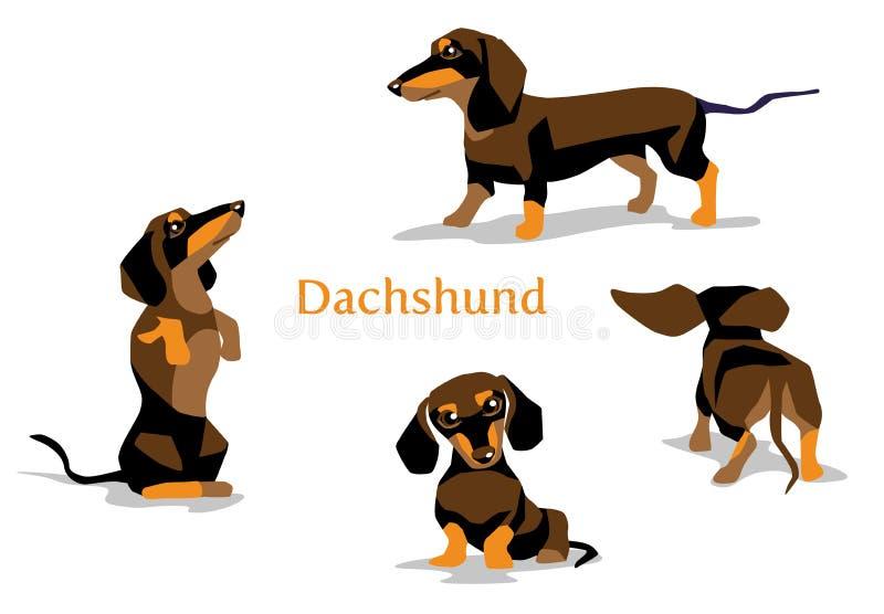 Τα κουτάβια Dachshund, σκυλί λουκάνικων σε διαφορετικό θέτουν ελεύθερη απεικόνιση δικαιώματος
