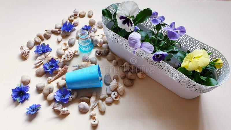 Τα κοχύλια πετρών θάλασσας ανθίζουν το στεφάνι, γιρλάντα, κορώνα, γιρλάντα, στέμμα, ο κυκλίσκος των λουλουδιών χτυπά την μπλε περ στοκ φωτογραφίες με δικαίωμα ελεύθερης χρήσης