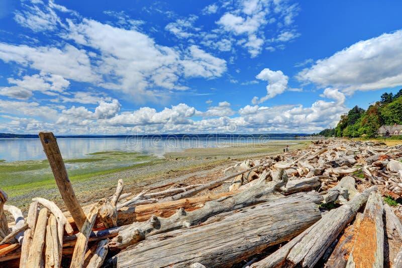 Τα κούτσουρα Driftwood ρυπαίνουν την ακτή στο πάρκο της Νορμανδίας, Ουάσιγκτον στοκ εικόνες με δικαίωμα ελεύθερης χρήσης