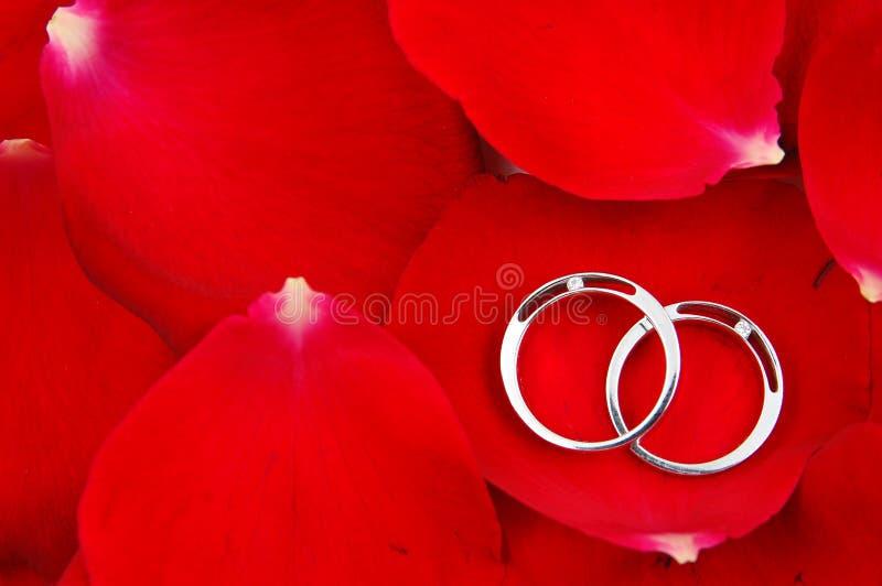 τα κόκκινα δαχτυλίδια πετάλων αυξήθηκαν γάμος στοκ φωτογραφία