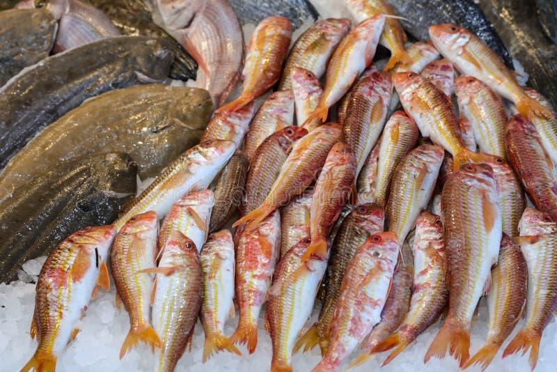 Τα κόκκινο ψάρια ριγωτών κεφάλων ή το surmuletus Mullus στον πάγο για την πώληση στα ελληνικά ψάρια ψωνίζουν στοκ φωτογραφίες
