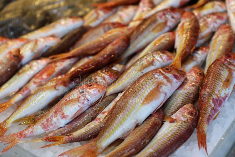 Τα κόκκινο ψάρια ριγωτών κεφάλων ή το surmuletus Mullus στον πάγο για την πώληση στα ελληνικά ψάρια ψωνίζουν στοκ εικόνα