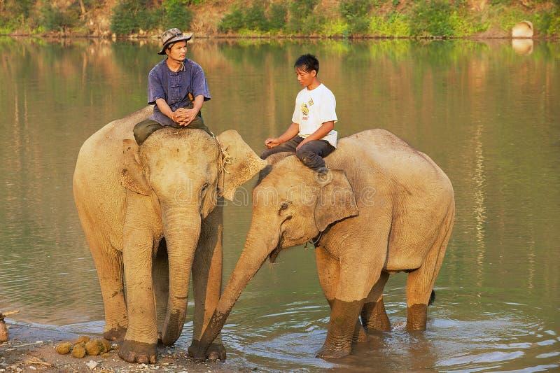Τα λαοτιανά άτομα κάθονται στις πλάτες ελεφάντων στην όχθη ποταμού στην ανατολή σε Luang Prabang, Λάος στοκ φωτογραφία με δικαίωμα ελεύθερης χρήσης