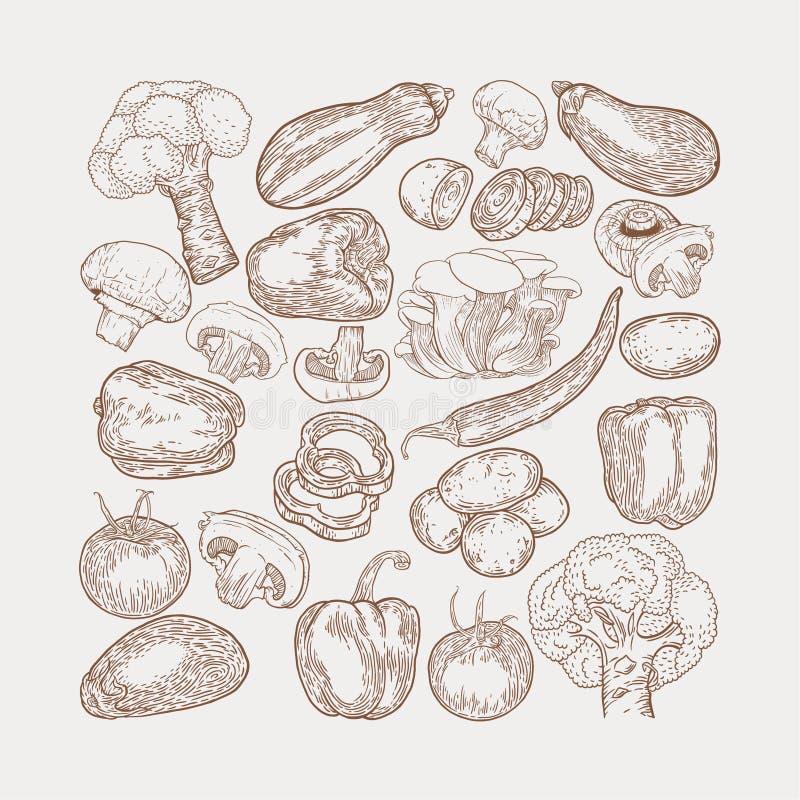 Τα λαχανικά δίνουν στο συρμένο σκίτσο τη διανυσματική απεικόνιση Μανιτάρι champ απεικόνιση αποθεμάτων