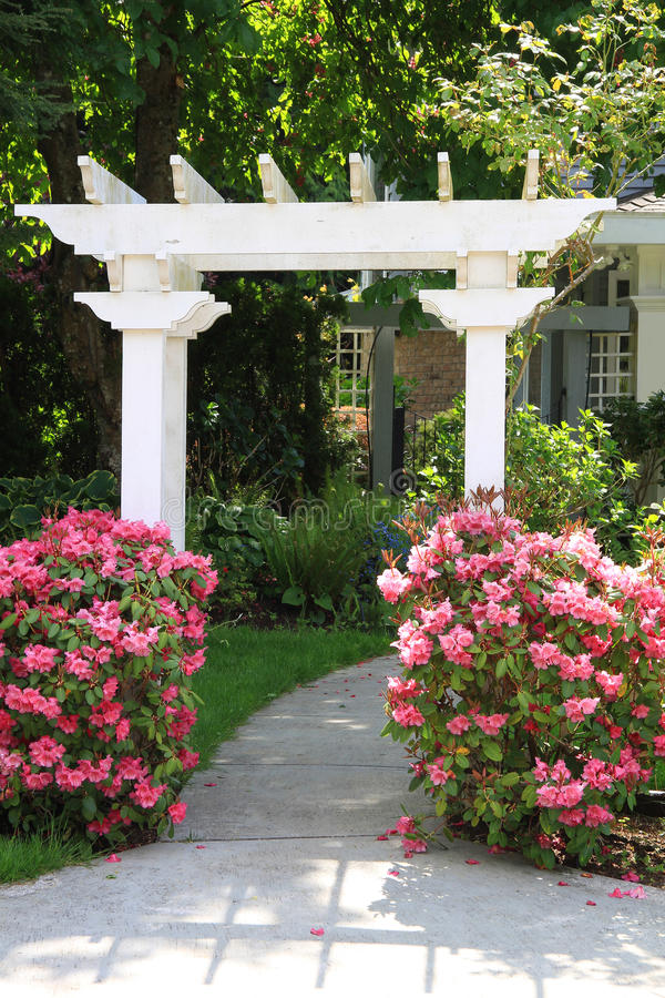 τα λουλούδια αξόνων καλλιεργούν ροζ στοκ εικόνα με δικαίωμα ελεύθερης χρήσης