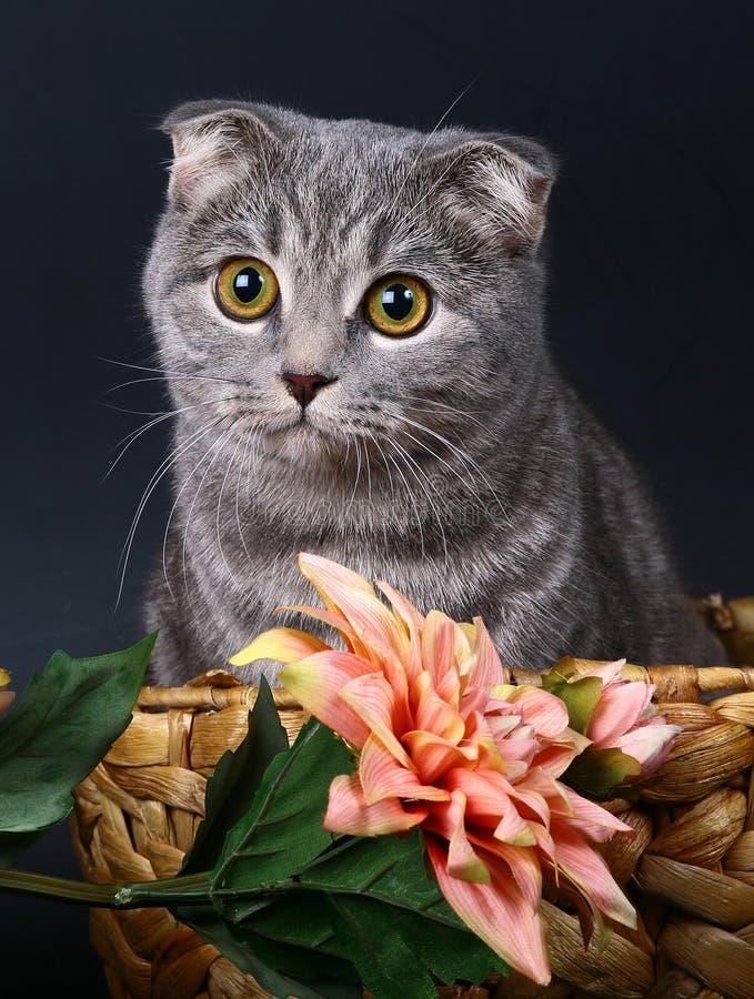 τα λουλούδια γατών καλ&alp στοκ εικόνες