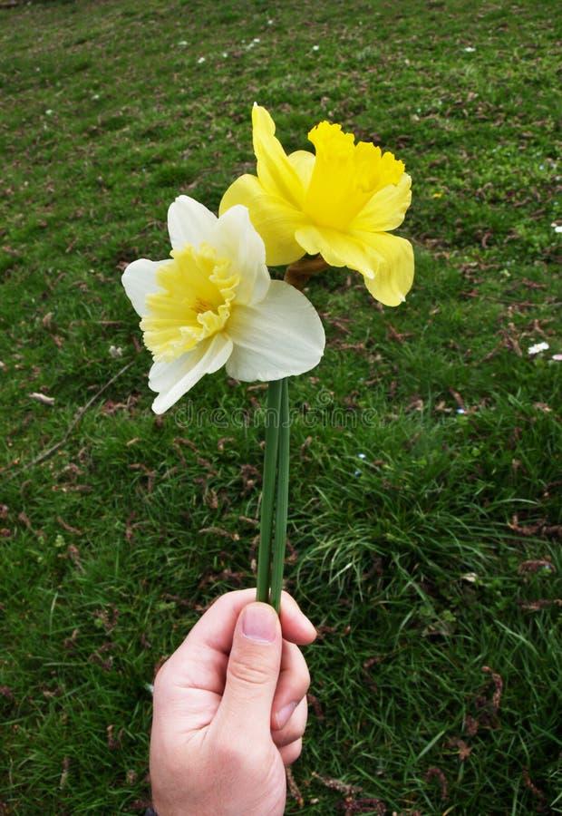 τα λουλούδια δίνουν στοκ φωτογραφία