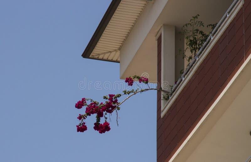 Τα λουλούδια είναι κόκκινα στο μπαλκόνι Η χλωρίδα των νότιων χωρών i στοκ εικόνα με δικαίωμα ελεύθερης χρήσης