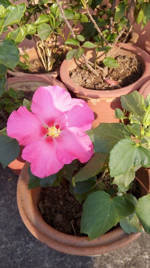 Τα λουλούδια είναι ο πιό γλυκός Θεός πραγμάτων που γίνεται πάντα και ξέχασαν να βάλουν μια ψυχή στοκ εικόνες