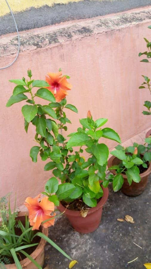 Τα λουλούδια είναι ο πιό γλυκός Θεός πραγμάτων που γίνεται πάντα και ξέχασαν να βάλουν μια ψυχή στοκ φωτογραφία με δικαίωμα ελεύθερης χρήσης