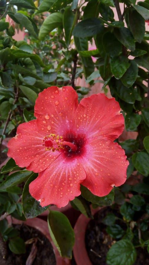 Τα λουλούδια είναι ο πιό γλυκός Θεός πραγμάτων που γίνεται πάντα και ξέχασαν να βάλουν μια ψυχή στοκ φωτογραφία