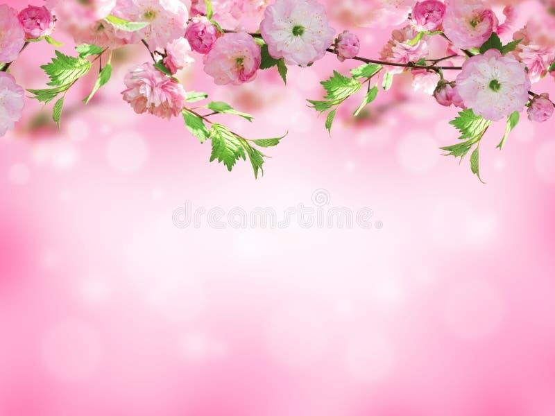τα λουλούδια εμβλημάτων ανασκόπησης διαμορφώνουν λίγη ρόδινη σπείρα στοκ εικόνες με δικαίωμα ελεύθερης χρήσης
