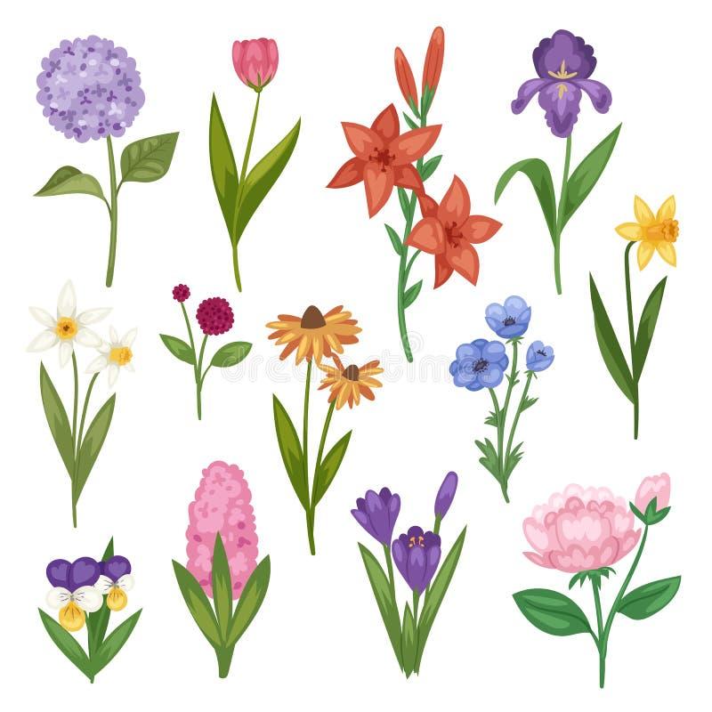 Τα λουλούδια και το floral διανυσματικό watercolor άνθισαν την πρόσκληση ευχετήριων καρτών για την ανθίζοντας ίριδα hydrangea γαμ διανυσματική απεικόνιση