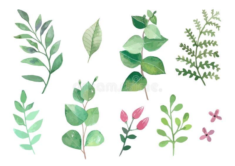 Τα λουλούδια και τα φυτά καθορισμένα watercolour τα φύλλα και τους κλάδους διανυσμάτων ελεύθερη απεικόνιση δικαιώματος