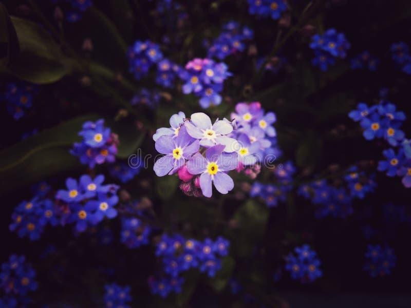 Τα λουλούδια καλλιεργούν την άνοιξη στοκ φωτογραφίες