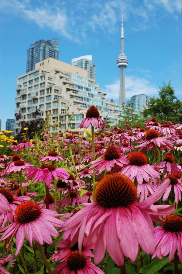 τα λουλούδια πόλεων ανα στοκ φωτογραφίες