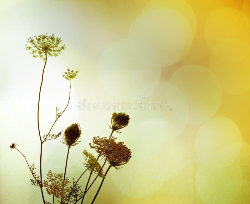 τα λουλούδια σκιαγραφ& στοκ εικόνες