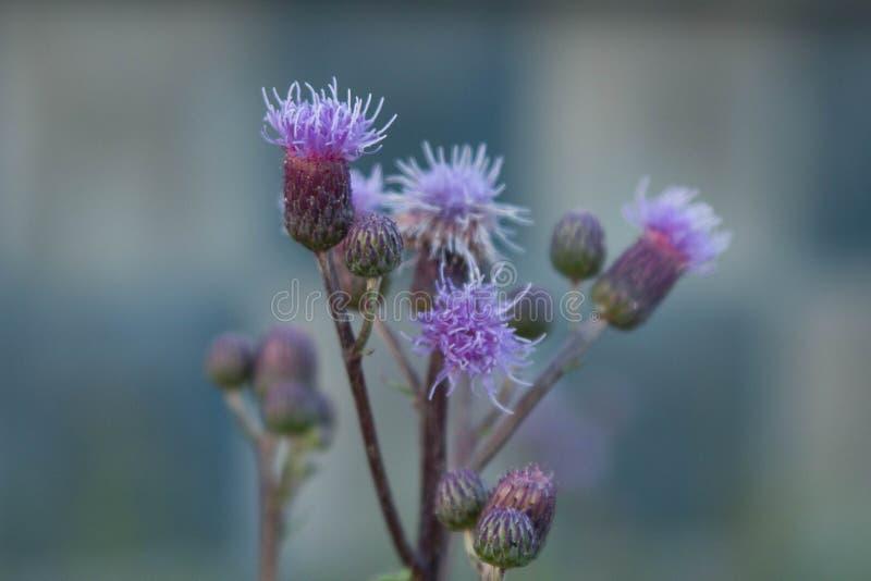 Τα λουλούδια στον τομέα στοκ εικόνες