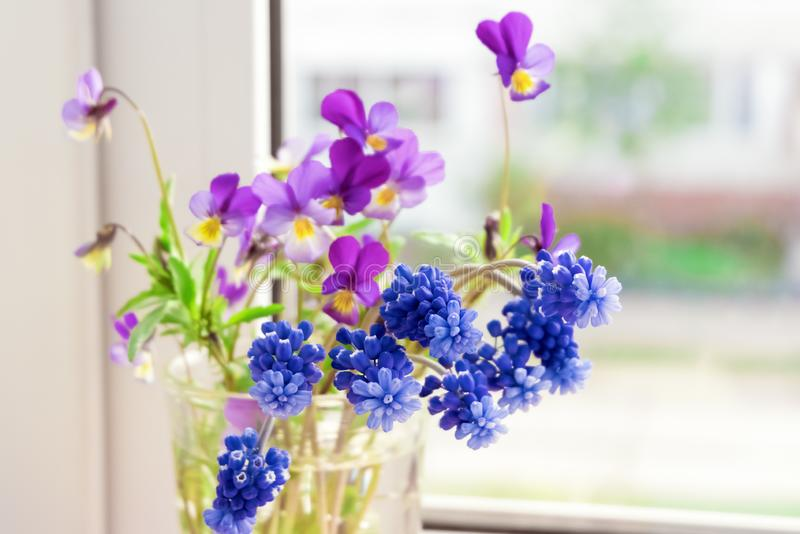 Τα λουλούδια στο παράθυρο Λουλούδια Pansies και Muscari στο windowsill στοκ φωτογραφία με δικαίωμα ελεύθερης χρήσης