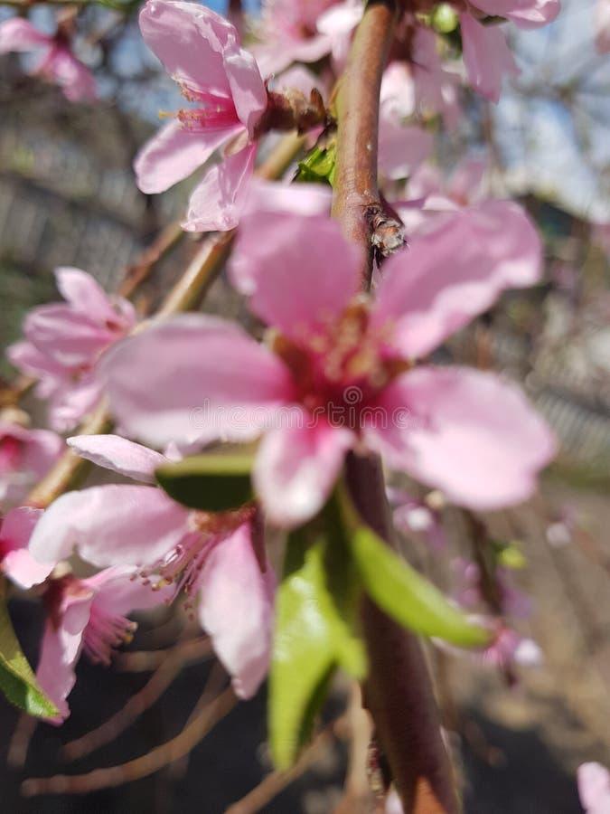 Τα λουλούδια τομέων είναι ευγενή χρώματα ομορφιά φυσική στοκ φωτογραφία με δικαίωμα ελεύθερης χρήσης