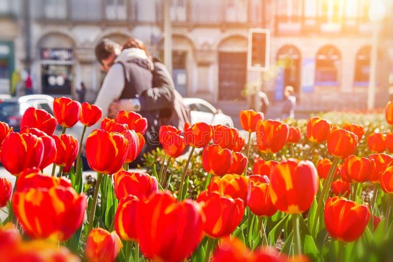 Τα λουλούδια τουλιπών στην πόλη, κλείνουν επάνω Ζεύγος των εραστών στο υπόβαθρο στοκ φωτογραφίες με δικαίωμα ελεύθερης χρήσης