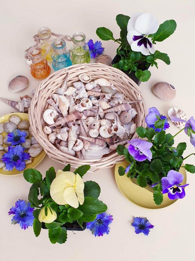 Τα λουλούδια Pansies πέτρες μιας στις εποχιακές λουλουδιών δοχείων λουλουδιών κοχυλιών θάλασσας ποτίζουν το ΛΦ κηπουρικής θερινών στοκ φωτογραφίες