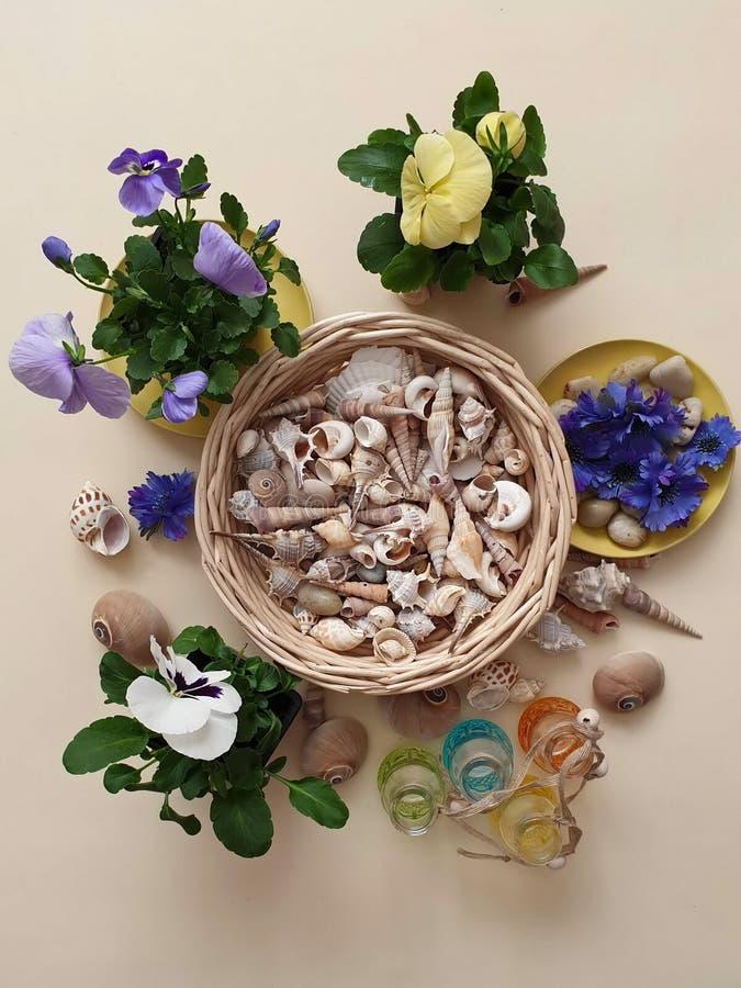 Τα λουλούδια Pansies πέτρες μιας στις εποχιακές λουλουδιών δοχείων λουλουδιών κοχυλιών θάλασσας ποτίζουν το ΛΦ κηπουρικής θερινών στοκ φωτογραφία