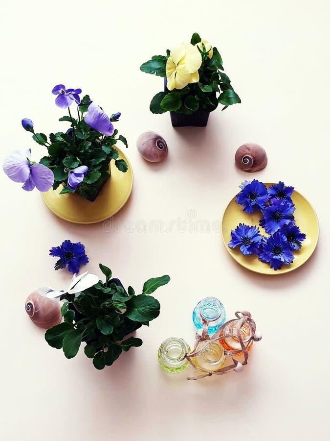 Τα λουλούδια Pansies πέτρες μιας στις εποχιακές λουλουδιών δοχείων λουλουδιών κοχυλιών θάλασσας ποτίζουν το ΛΦ κηπουρικής θερινών στοκ εικόνες