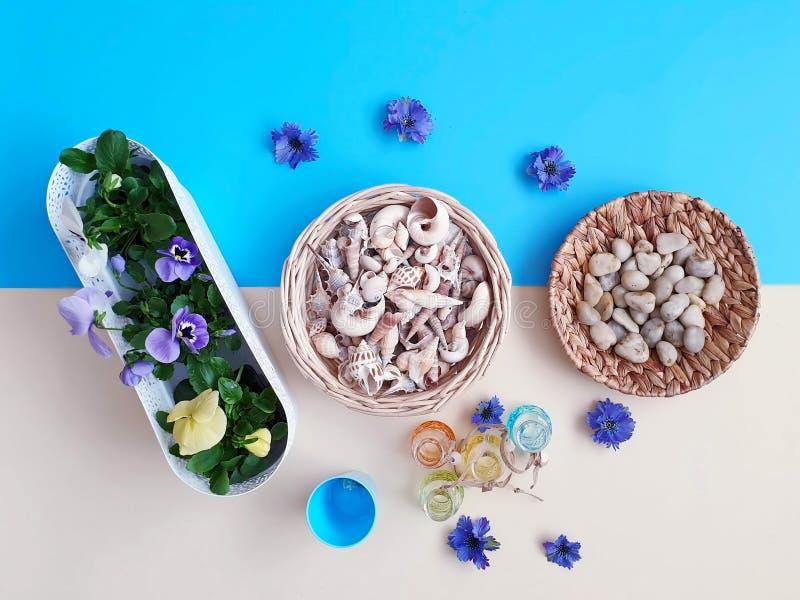 Τα λουλούδια Pansies πέτρες μιας στις εποχιακές λουλουδιών ζαρντινιερών δοχείων λουλουδιών κοχυλιών θάλασσας ποτίζουν τη θερινή π στοκ εικόνα