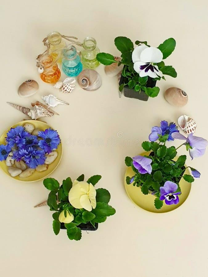 Τα λουλούδια Pansies πέτρες μιας στις εποχιακές λουλουδιών ζαρντινιερών δοχείων λουλουδιών κοχυλιών θάλασσας ποτίζουν τη θερινή π στοκ φωτογραφία με δικαίωμα ελεύθερης χρήσης