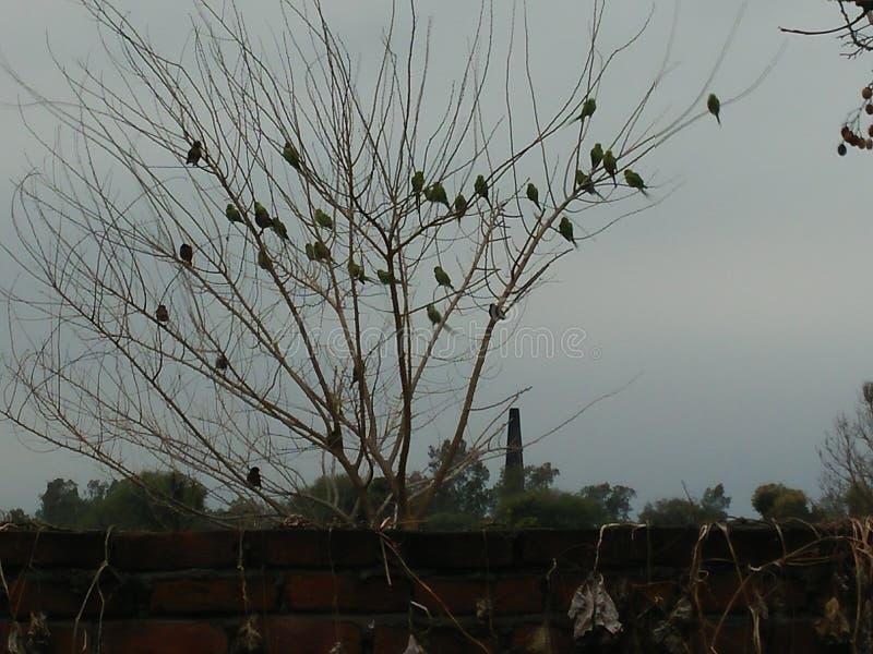 Τα λυπημένα πουλιά τραγουδούν ακόμα στοκ φωτογραφίες με δικαίωμα ελεύθερης χρήσης
