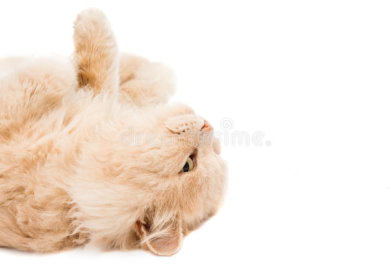 τα μάτια γατών που απομονώνονται φαίνονται γύρω από το καλυμμένο έκπληκτο στούντιο λευκό στοκ εικόνες