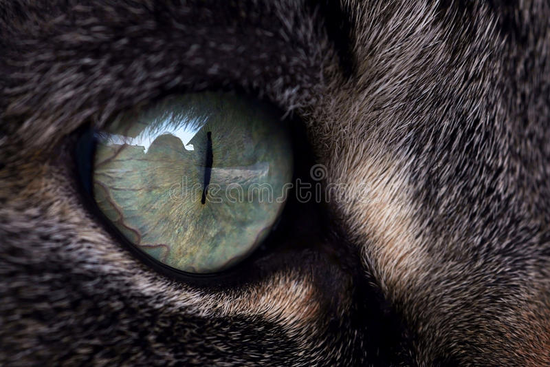 Τα μάτια Cat´s στοκ φωτογραφίες