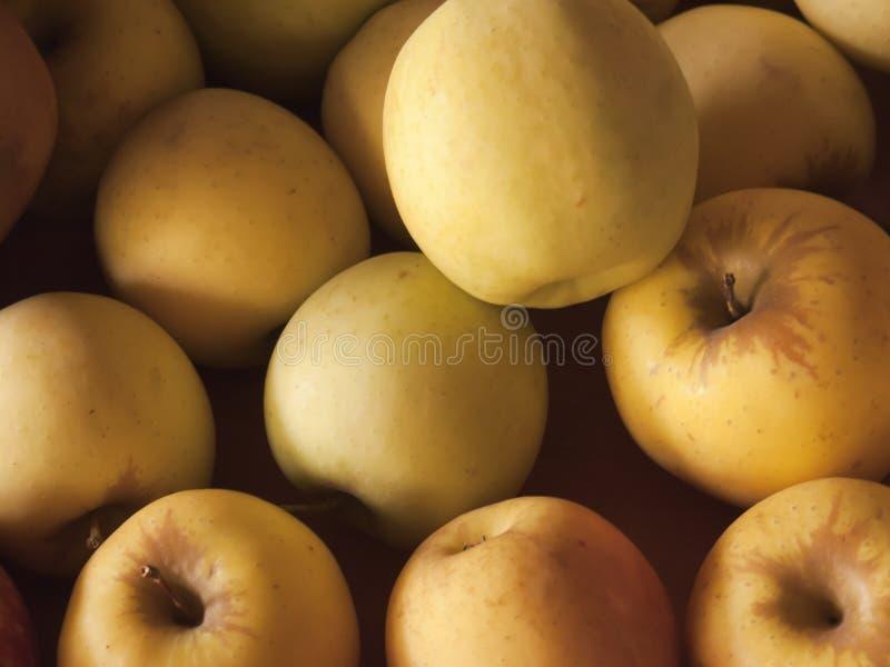 τα μήλα κλείνουν το χρυσό φως του ήλιου επάνω στοκ φωτογραφίες με δικαίωμα ελεύθερης χρήσης