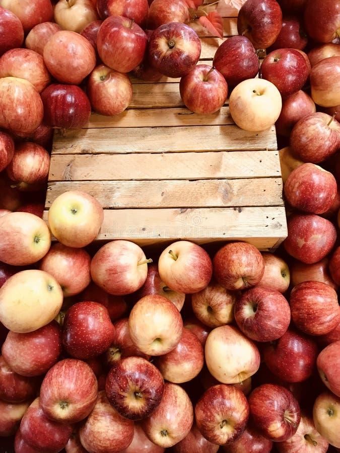 Τα μήλα σε μια αγορά αγροτών `, μια φυσική λιανική αγορά σκόπευαν να πωλήσουν τα τρόφιμα άμεσα από τους αγρότες στους καταναλωτές στοκ φωτογραφία με δικαίωμα ελεύθερης χρήσης
