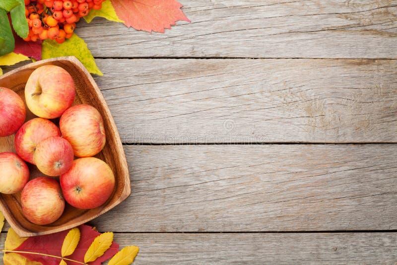 Τα μήλα στο κύπελλο και τα ζωηρόχρωμα φύλλα φθινοπώρου επάνω το υπόβαθρο στοκ εικόνα