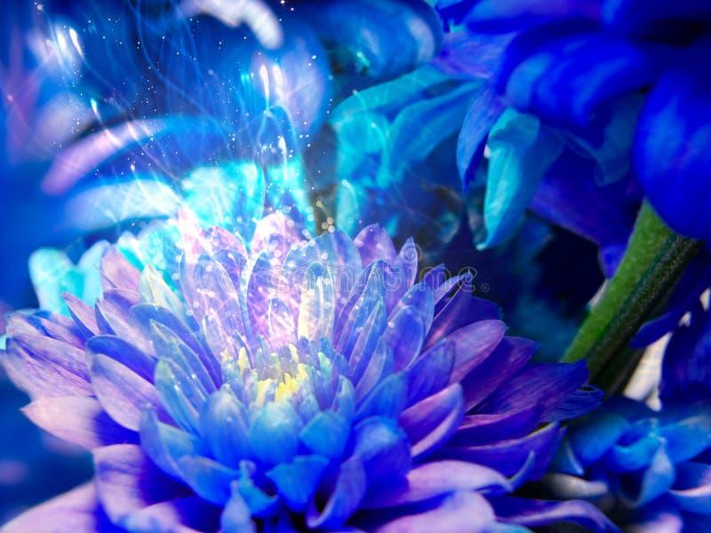 Τα μαγικά κύματα πηγαίνουν από το μπλε λουλούδι στοκ φωτογραφίες με δικαίωμα ελεύθερης χρήσης