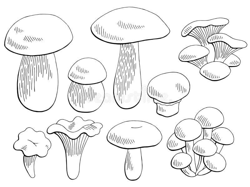 Τα μανιτάρια καθορισμένα το γραφικό μαύρο απομονωμένο λευκό διάνυσμα απεικόνισης σκίτσων διανυσματική απεικόνιση