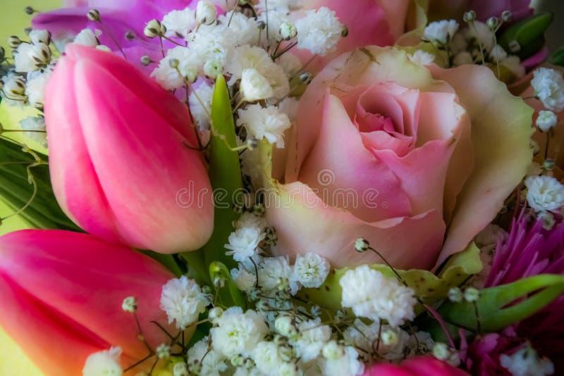 Τα μαλακά ρόδινα λουλούδια και αυξήθηκαν υπόβαθρο στοκ εικόνες