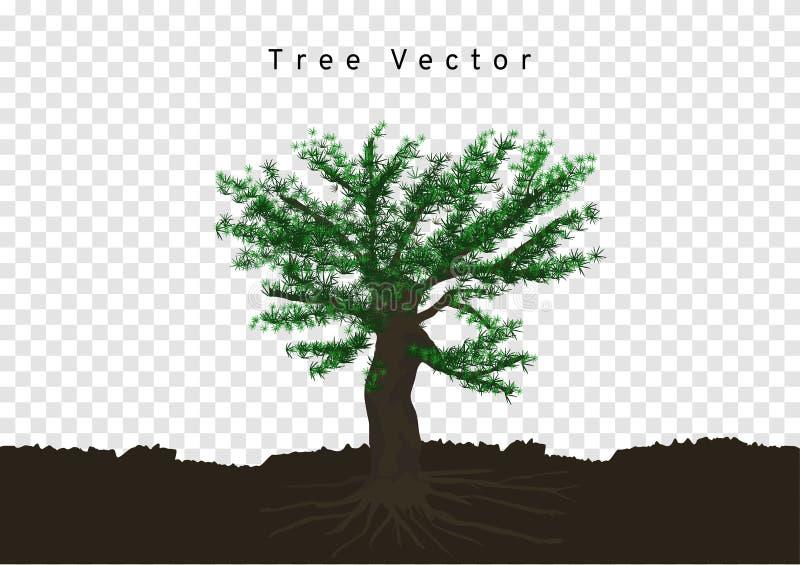 Τα μεγάλα δέντρα πεύκων διέδωσαν τις ρίζες τους, διακλαδίστηκαν στο χώμα, διάνυσμα δέντρων που απομονώθηκε στο υπόβαθρο διαφάνεια διανυσματική απεικόνιση