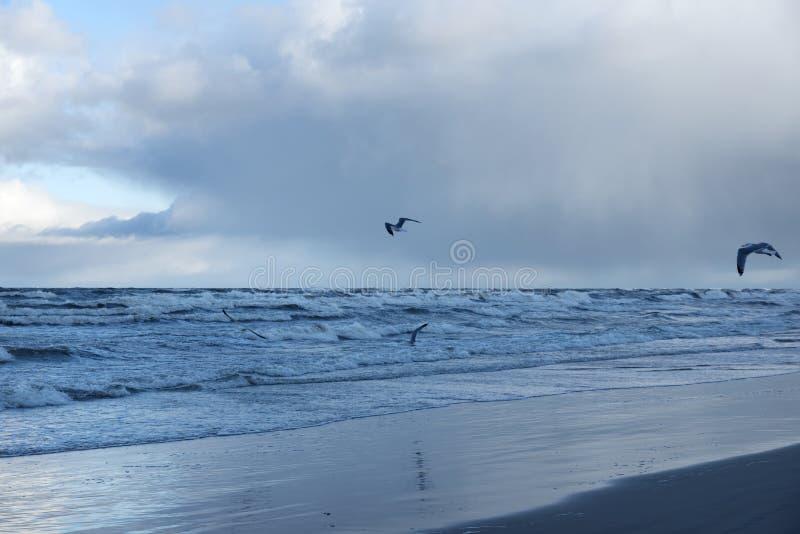 Τα μεγάλοι κύματα και οι γλάροι μετά από τη θάλασσα μαίνονται το πρωί στη θάλασσα της Βαλτικής σε Stegna στοκ φωτογραφίες