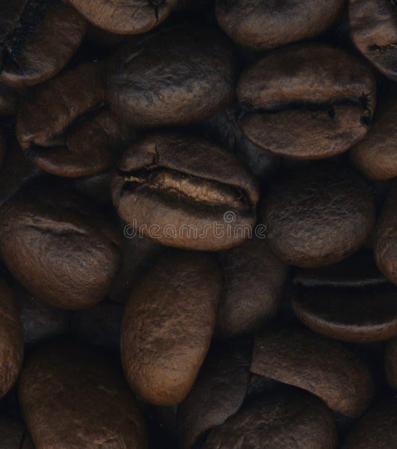 Τα μεγάλα φασόλια καφέ κλείνουν επάνω στοκ εικόνες