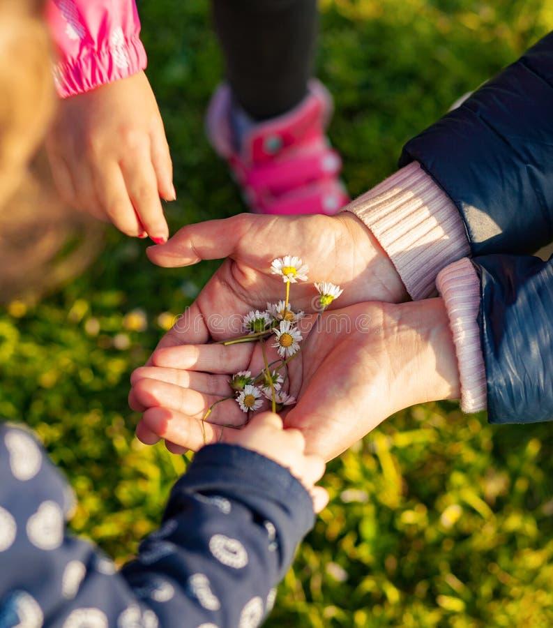 Τα μικρά κορίτσια συλλέγουν τις μικρές μαργαρίτες στοκ φωτογραφίες με δικαίωμα ελεύθερης χρήσης